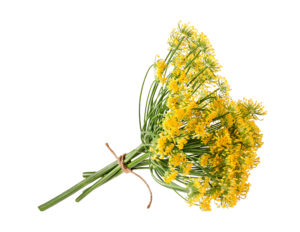 Fennel herbs to protect the home from negative energy