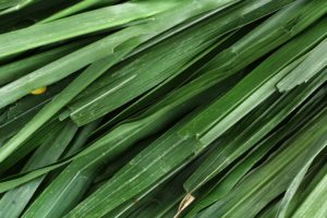 vetiver to protect from negative energy
