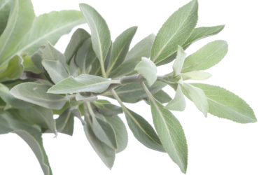 Herbs to Protect the House from Negative Energy