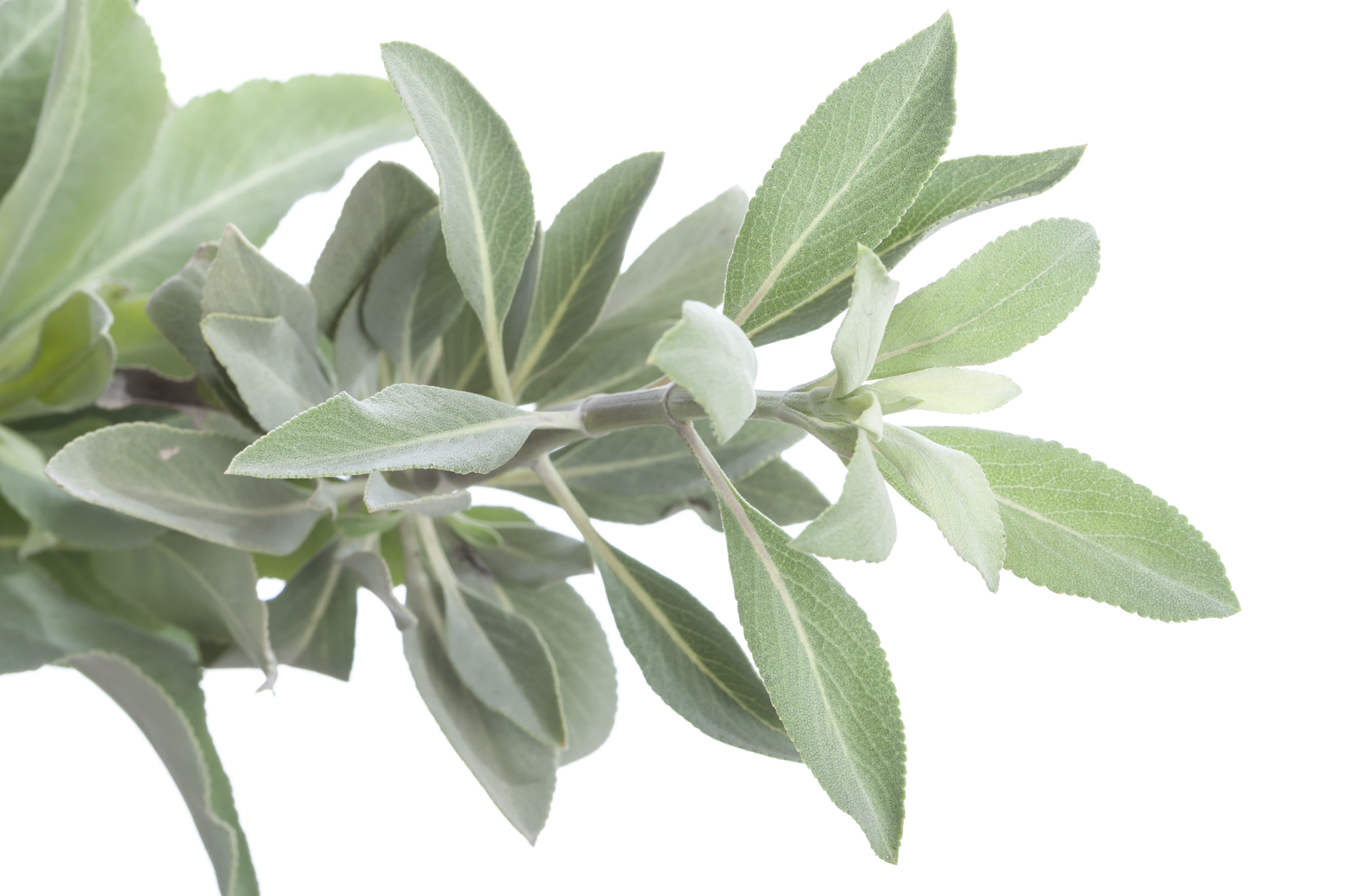 White Sage Intuitive Journey