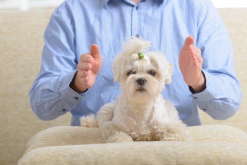 Distant Reiki Pet Healing