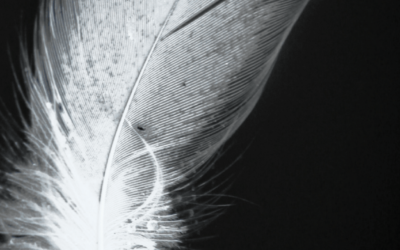 What Does it Mean to Find Angel Feathers?