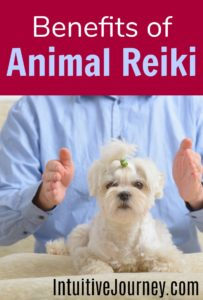 How Reiki can help animals. Great info here about the benefits of Reiki healing on animals. It is so great to be able to do energy healing on animals.