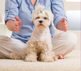 How Reiki Can Help Animals