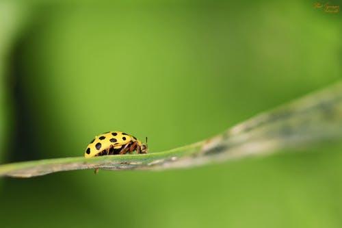 ladybug. spiritual meaning of ladybugs 4